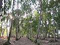 Horshim wood024.jpg