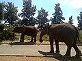 Hospitaalpark, Bloemfontein, 9301, South Africa - panoramio.jpg