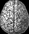 Human brain.png