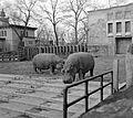 Hungary, Budapest XIV., Zoo Fortepan 5238.jpg