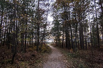 Huron National Forest - Trail in the Huron National Forest, Michigan