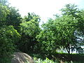 Hussainsagar Lake Wetland Eco Region 01.JPG