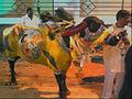 Hyderabad bull.jpg