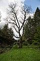 ID 1059 Nußbaum in Pux 0006.jpg