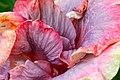 IMG 8161 Hibiscus Photographed by Peak Hora.jpg