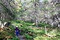 I urskogen.jpg