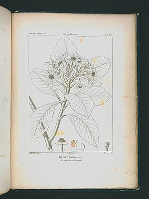 Icones selectae plantarum quas in systemate universali (Tab. 083).jpg