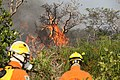 Incêndio no Parque Nacional de Brasília (36117841613).jpg