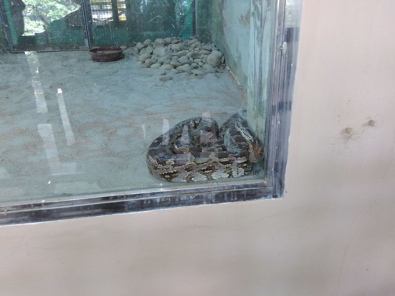 File:India Python jpg - Wikimedia Commons