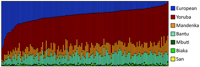 Genetic clustering of 128 African Americans, by Zakharaia et al. (2009). Each vertical bar represents an individual. Individual ancestry estimates for 128 African Americans.png