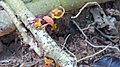 Industrious Ants (42624849204).jpg