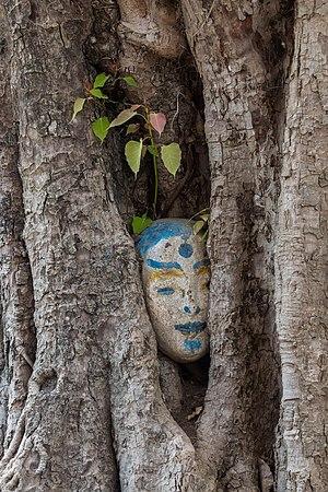 Ingrown oval sculpture of human head in a tree trunk in Laos