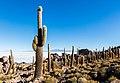 Isla Incahuasi, Salar de Uyuni, Bolivia, 2016-02-04, DD 43.jpg