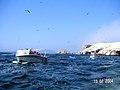 Islas Ballestas - panoramio (12).jpg