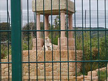 Isle of Wight Zoo - tiger m. indisk tema.jpg