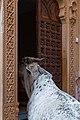 Jaisalmer-Amar Sagar Pol Bazar-09-20131010.jpg