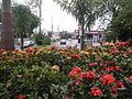 Jardim de Mogi Guaçu Central.JPG