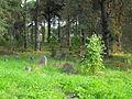 Jewish cemetery in Rakov 1g.jpg