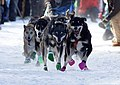 John Beargrease Dogsled Marathon - Two Harbors Minnesota (32708014495).jpg