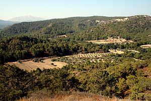"Natural history of Rhodes - Forest (the dominant trees are Pinus brutia, the Turkish pine and the very closely related Pinus halepensis, the Aleppo pine, and in the valleys olive groves. The ""bare"" mountain in the background has its own specialist species, Kameiros."