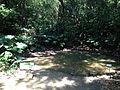 Kampoana Pond in Sefa-Utaki.JPG