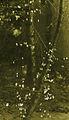 Karel Koutsky z pražských dvorků 3.jpg