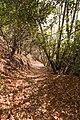 Kattoudhia-Mylikouri Nature Trail - panoramio.jpg