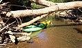 Kayak Eno River Hillsborough NC 164338 (24389428007).jpg