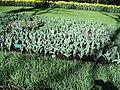 Keukenhof 2012 - panoramio (148).jpg
