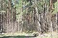 Kleistu mežs, Rīga, Latvia - panoramio (4).jpg