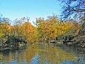 Knighton Woods Pond - geograph.org.uk - 43549.jpg