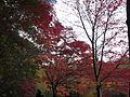 Kobe Municipal Arboretum in 2013-11-16 No,15.JPG
