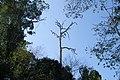 Koh Tarutao, Thailand, Forest.jpg