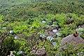 Konso village of Mecheke (26) (29049612062).jpg
