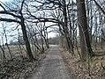 Kopřivnice, Paseky, cesta - panoramio (2).jpg