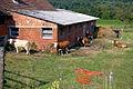 Krave Vaneča.jpg