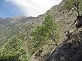Kumaon Himalaya 2.jpg