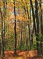 Kunes Camp Trail (4) (10127204224).jpg