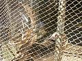 Kyustendil Zoo 11.JPG