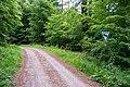 Lügde - 2015-05-24 - LIP-049 Ilsenbach (8).jpg