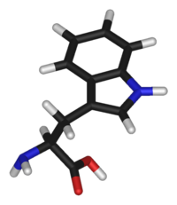 L-tryptophan-3D-sticks.png