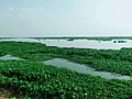 Laguna Lake from Angono, Rizal (5).jpg