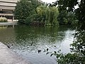 Lake at the National Archives, Kew - geograph.org.uk - 964648.jpg