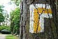 Las Szpegawski, trail (2).JPG
