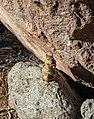 Lassen Volcanic National Park (d108b6fe-abb0-404d-a071-d22c5c695395).jpg