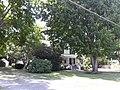 Leafy speefing in Belle Haven.jpg