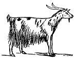 Lear - Goat.jpg