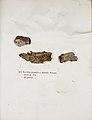 Lichenes Helvetici IX X 1833 009.jpg
