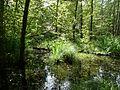 Lidingö nature 2016 1.jpg