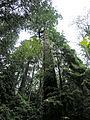 Lighthouse Park trees.jpg